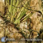 WTP-265 Mothwing-Marsh Mimicry