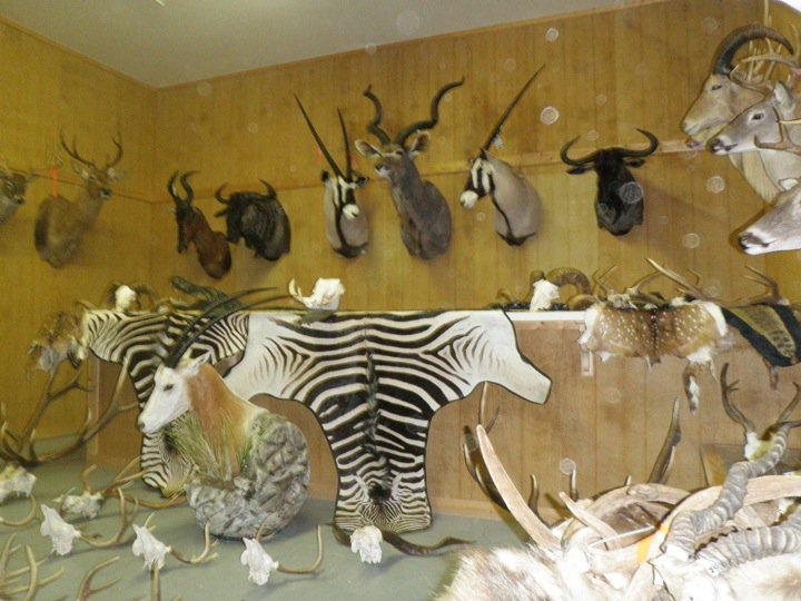 Taxidermy Designs Showroom